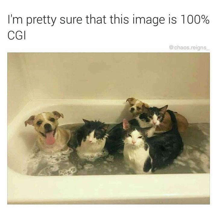 meme - Canidae - I'm pretty sure that this image is 100% CGI @chaos.reigns