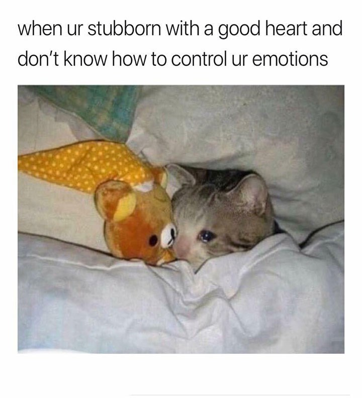 meme - Cat - when ur stubborn with a good heart and don't know how to control ur emotions