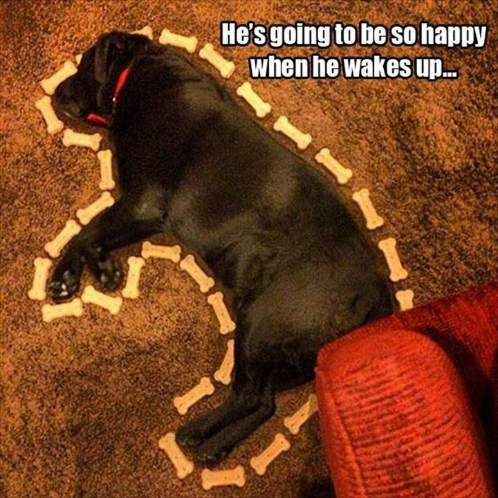meme - Dog - He'sgoing to be so happy When he wakes up.