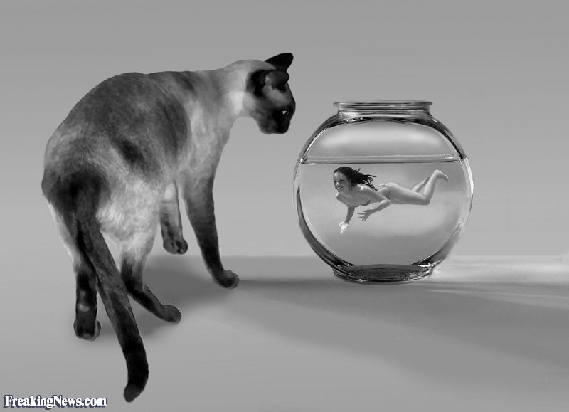 Cat - Freaking News.com