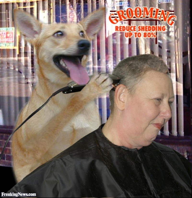Dog - EROOMEN REDUCE SHEDDING UP TO 80% FreakingNews.com