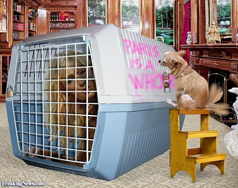 Dog supply - WHO UYLO Freaking News.com