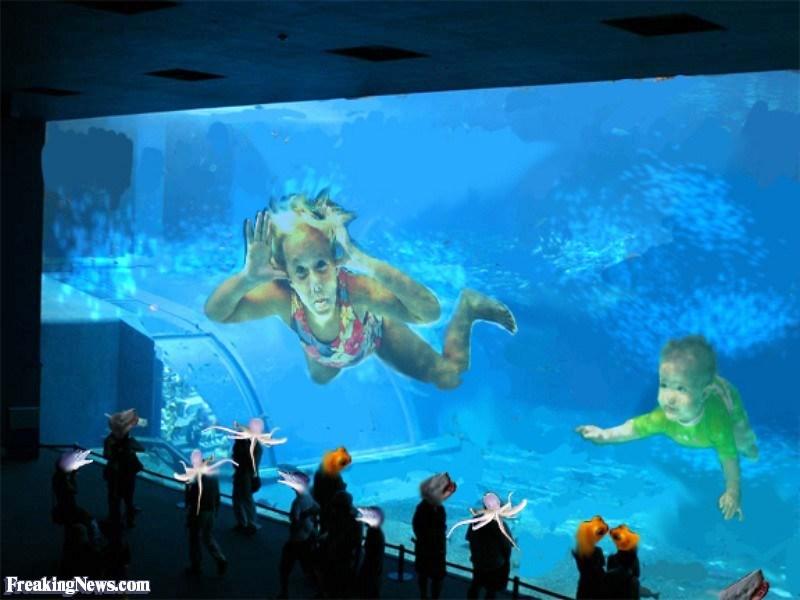 Aquarium - FreakingNews.com