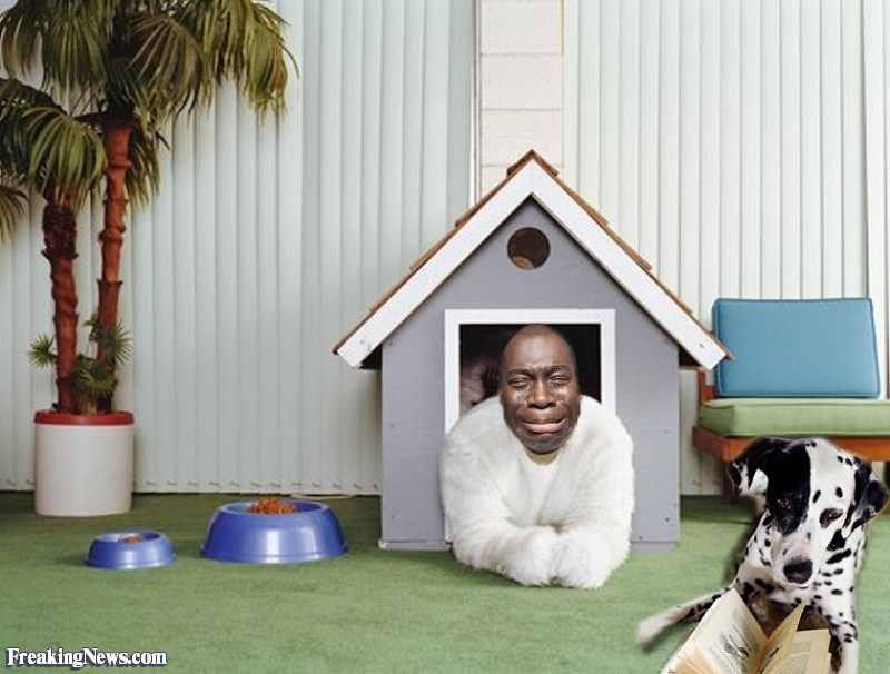 Dog - Freaking News.com