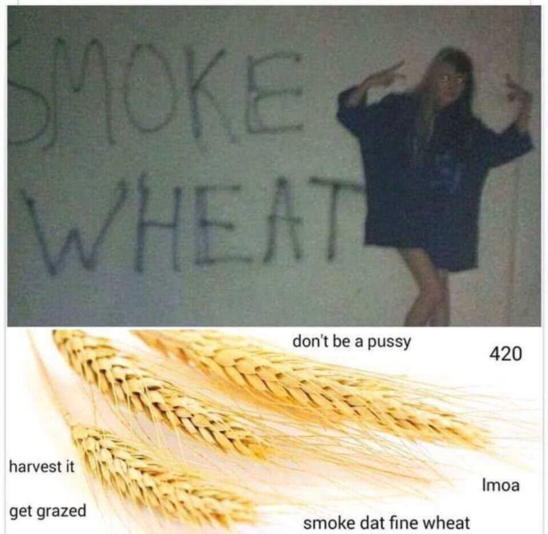 Text - SMOKEA WHEAT don't be a pussy 420 harvest it Imoa get grazed smoke dat fine wheat