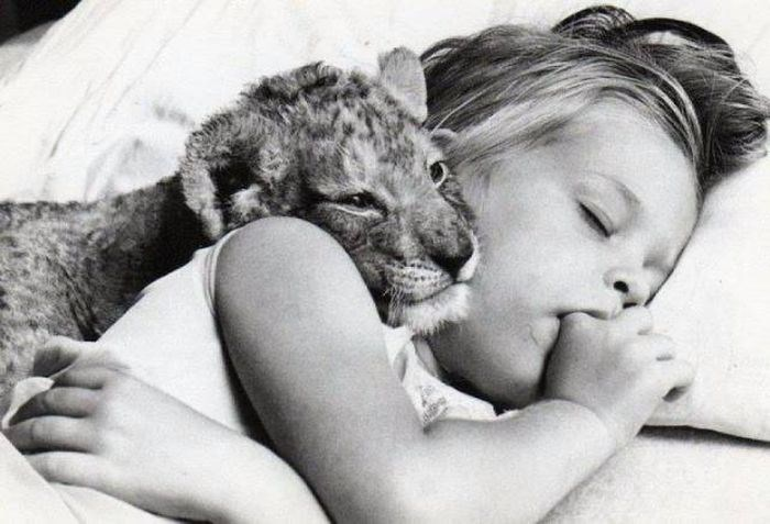 Animal photo, girl sleeping with a tiger cub