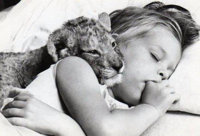 Animal photo, girl sleeping with a tiger cub