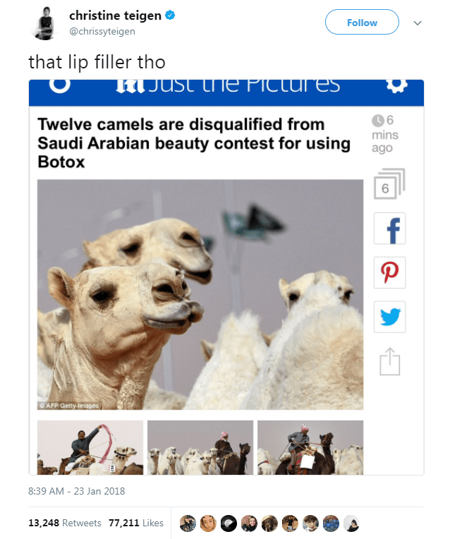 Camelid - christine teigen Follow @chrissyteigen that lip filler tho JUst he PicLures Twelve camels are disqualified from Saudi Arabian beauty contest for using ag Botox 6 f P CAFP Getty Images 8:39 AM - 23 Jan 2018 13,248 Retweets 77,211 Likes CO