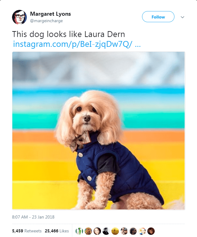 Dog - Margaret Lyons Follow @margeincharge This dog looks like Laura Dern instagram.com/p/BeI-zjqDw7Q/ ... 8:07 AM - 23 Jan 2018 5,459 Retweets 25,466 Likes