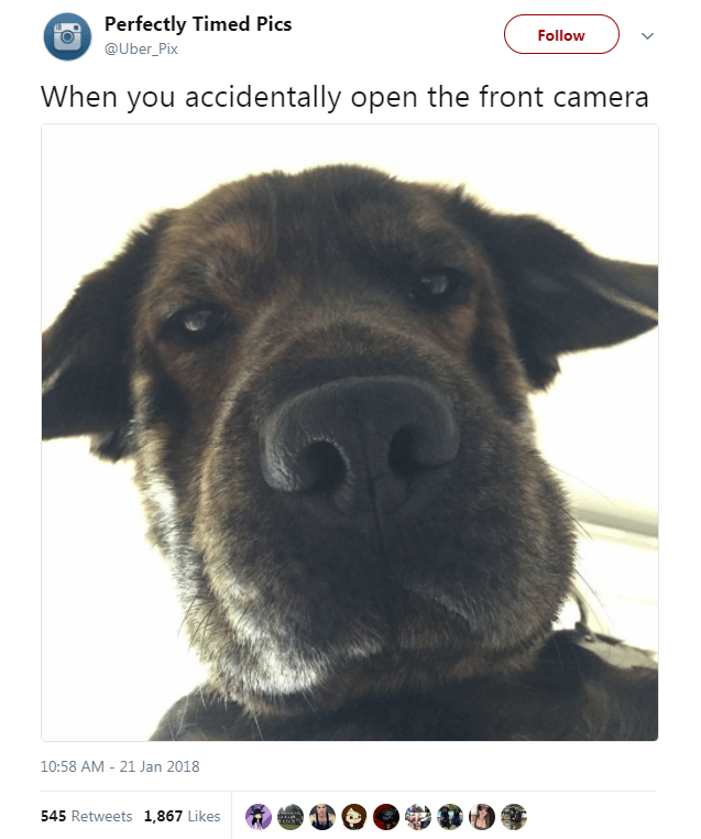 Dog breed - Perfectly Timed Pics Follow @Uber_Pix When you accidentally open the front camera 10:58 AM - 21 Jan 2018 545 Retweets 1,867 Likes