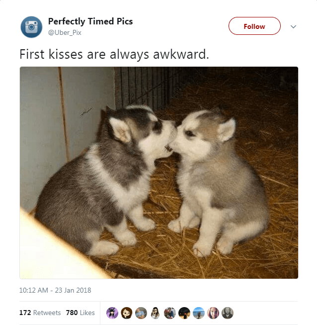 Mammal - Perfectly Timed Pics Follow @Uber_Pix First kisses are always awkward. 10:12 AM - 23 Jan 2018 172 Retweets 780 Likes