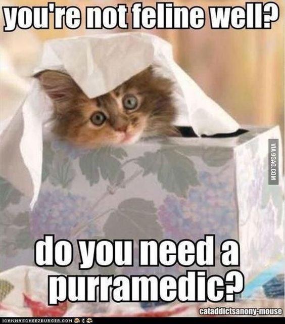 puns - Photo caption - you're not feline well? do you need a purramedic? cataddictsanony-mouse RGER.COM ICANHASOHEEZBURG VIA 9GAG.COM