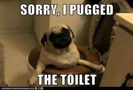 pun - Pug - SORRY, I PUGGED THE TOILET IORNHRSOHEEDURCER.OOH