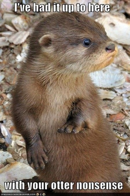 pun - Vertebrate - Fve had it up to here with your otter nonsense ICANHASCHEEZBURGER.OOM