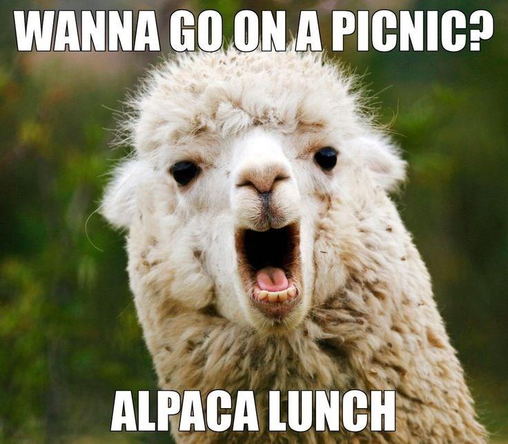 pun - Alpaca - WANNA GO ON A PICNIC? ALPACA LUNCH