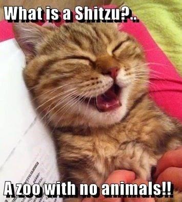 pun - Cat - Whatis a Shitzu?. Azoo with no animals!!