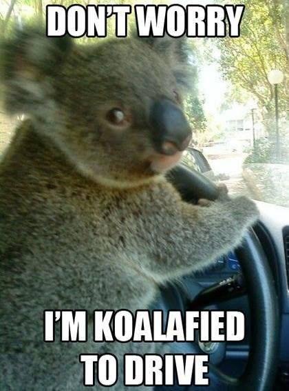 pun - Koala - DONT WORRY I'M KOALAFIED TO DRIVE