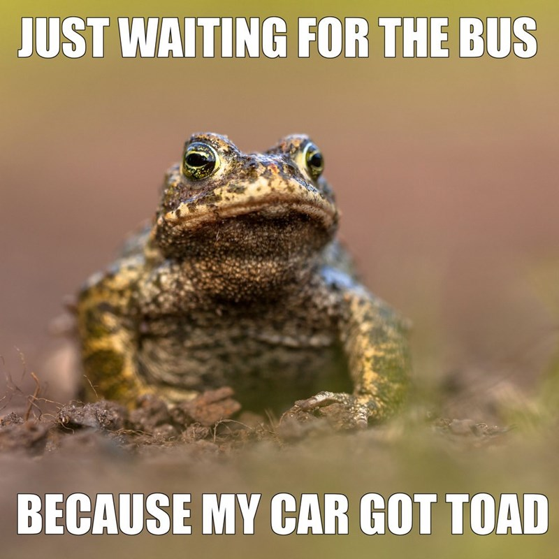 pun - Toad - JUST WAITING FOR THE BUS BECAUSE MY CAR GOT TOAD