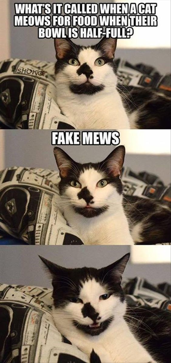 pun - Cat - WHAT'S IT CALLED WHENACAT MEOWS FOR FOOD WHEN THEIR BOWLIS HALF-FULL? SHOKO FAKE MEWS