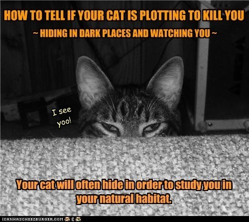Cat - HOW TO TELL IF YOUR CAT IS PLOTTING TO KILL YOU HIDING IN DARK PLACES AND WATCHING YOU I see yoo! Your cat will often hide inorderto studyyouin Vour natural habitat ICANHASCHEE2EURGER cOM