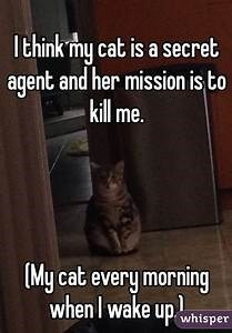Footwear - Ithink my cat is a secret agent and her mission is to kill me. My cat every morning when I wake up whisper