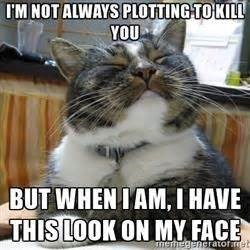Cat - I'M NOT ALWAYS PLOTTING TO KILL YOU BUT WHEN IAM, I HAVE THIS LOOK ON MY FACE nemegengatofaet