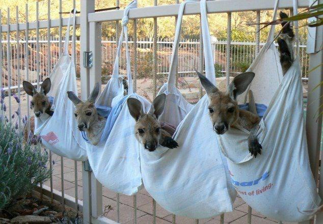 cute - Animal shelter - of living