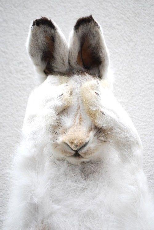 cute - Domestic rabbit