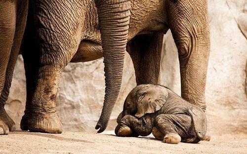 cute - Elephant