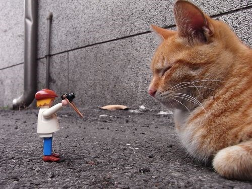 cute - Cat