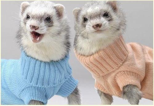 cute - Ferret