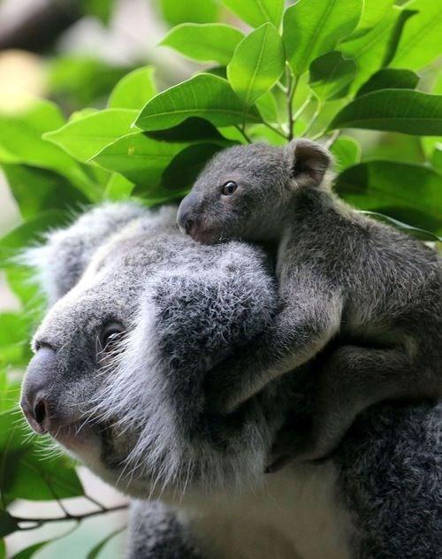cute - Mammal