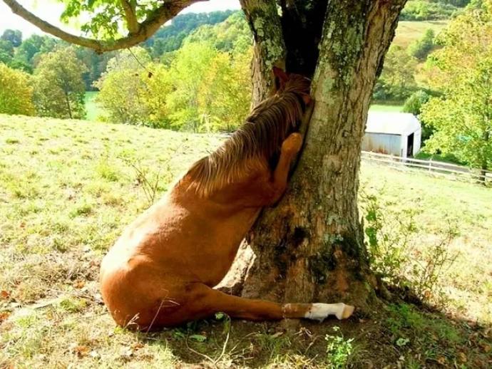 shy animal - Tree