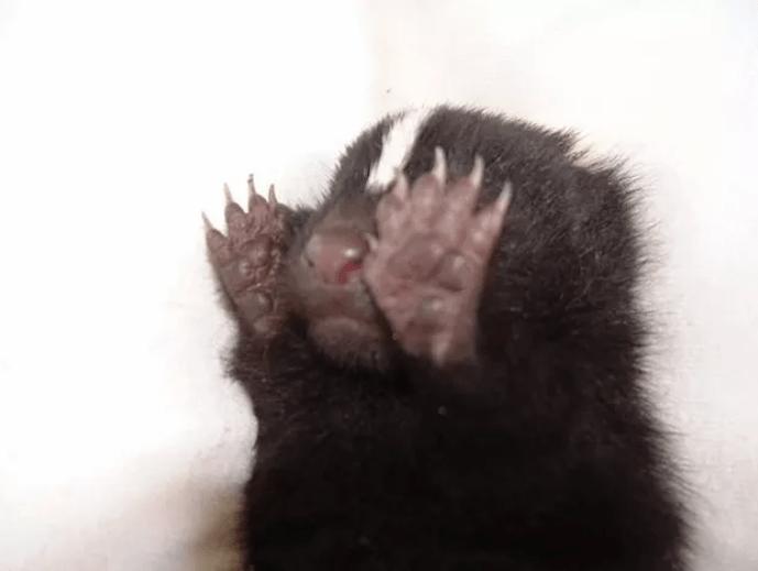 shy animal - Nose