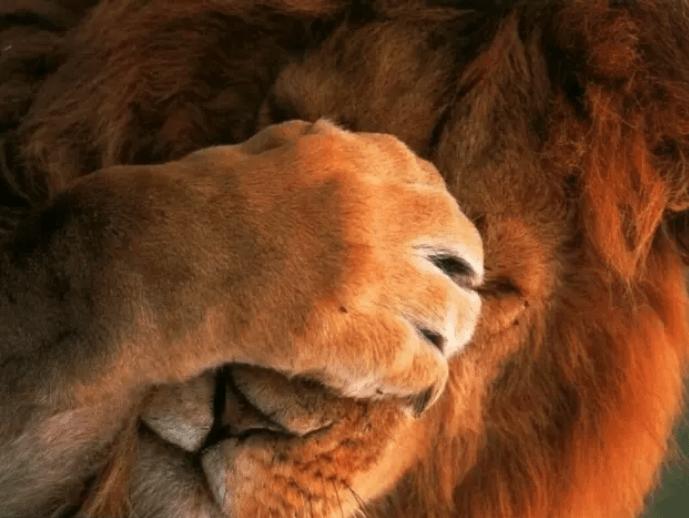 shy animal - Fur