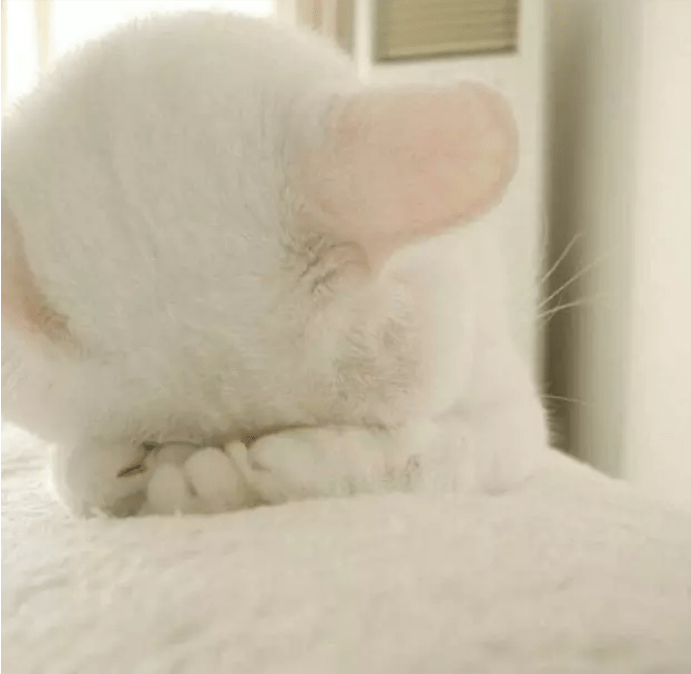 shy animal - Skin