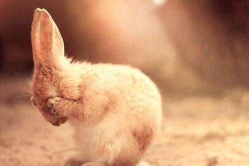 shy animal - Domestic rabbit