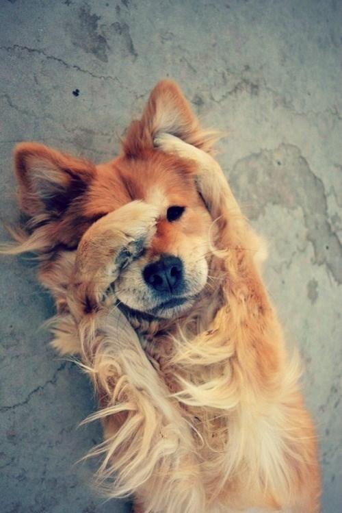 shy animal - Dog
