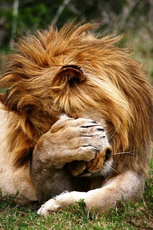 shy animal - Mammal