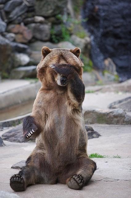shy animal - Brown bear
