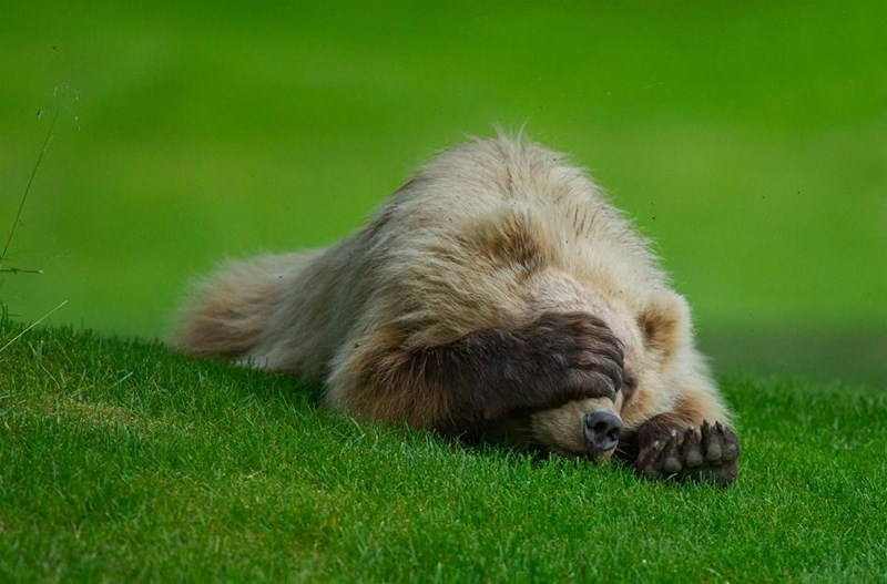shy animal - Grass