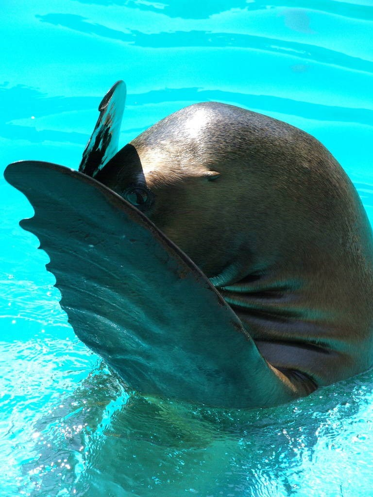 shy animal - Common bottlenose dolphin
