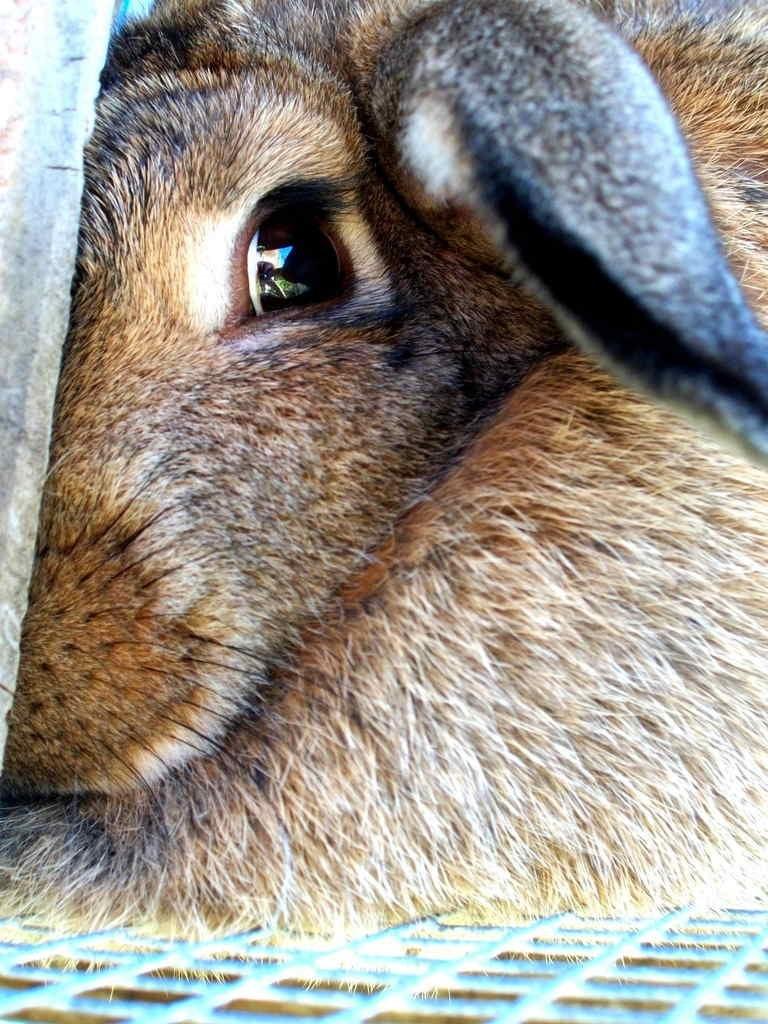 shy animal - Mammal - w.i z