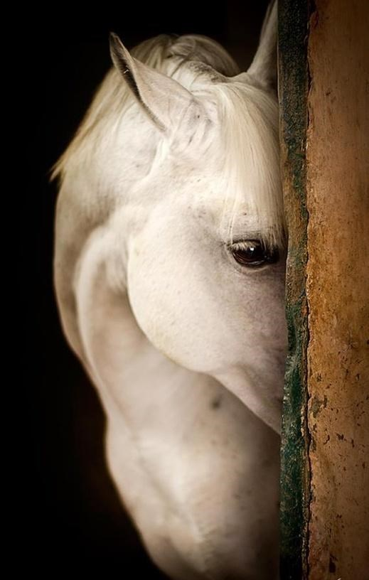 shy animal - Horse