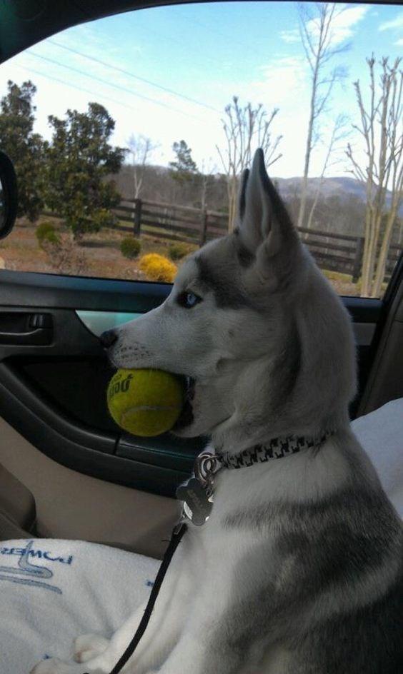 Dog - Den