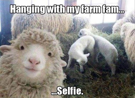 meme - Vertebrate - Hanging with my farm fam... Selfie