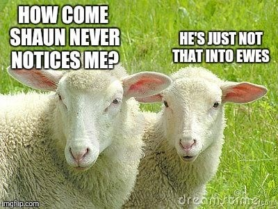 meme - Vertebrate - HOW COME SHAUN NEVER NOTICES ME? HESJUST NOT THAT INTO EWES dreamtiaom imgfip.com