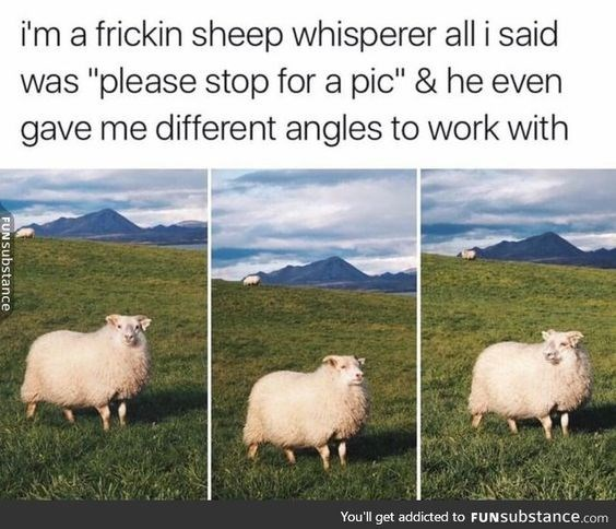 "meme - Sheep - i'm a frickin sheep whisperer all i said was ""please stop for a pic"" & he even gave me different angles to work with You'll get addicted to FUNSubstance.com FUNSubstance"