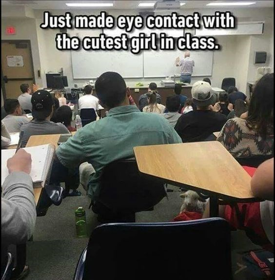 meme - Job - Just made eye contact with the cutest girlin class.
