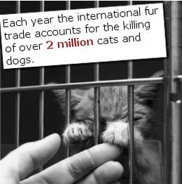 Text - Each year the international fur trade accounts for the killing of over 2 million cats and dogs.